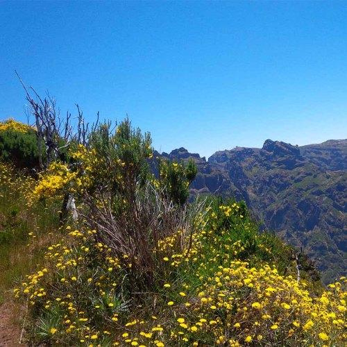 Auf dem Abstieg zum Encumeada-Pass.